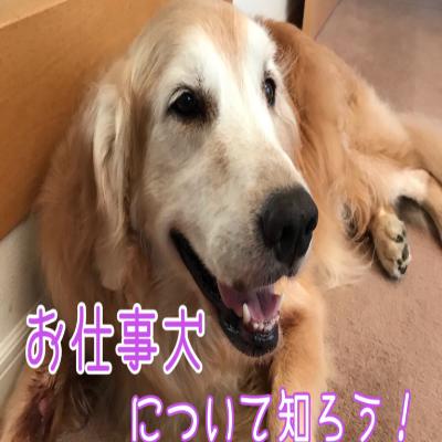 お仕事犬について知ろう!