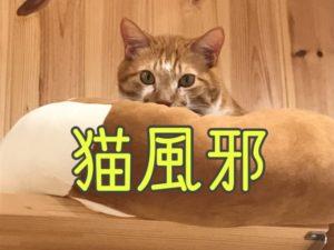 猫風邪について知ろう!
