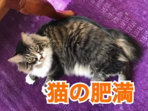 猫の肥満!