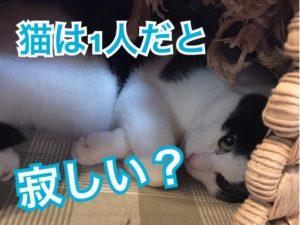 猫は1人だと寂しい!?