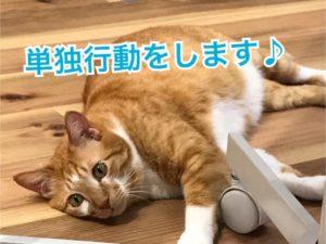 猫の単独行動って?