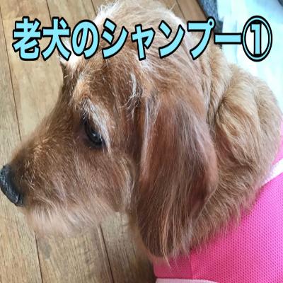 老犬のシャンプーの注意点〜その1〜